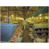 Nuovo tipo nido situantesi manuale per il pollo di strati
