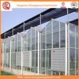 Casa verde de vidro da batata/tomate com sistema de ventilação