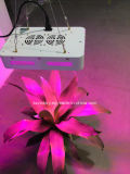 O diodo emissor de luz dobro de 300 microplaquetas do watt cresce a luz