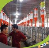Leistungsfähige Schwein-Ketten-führender Systems-Selbstgebrauch im Schwein-Bauernhof
