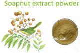 Выдержка Sapindus, сапонины выдержки 40%~70% Mukorossi Sapindus