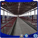 Almacén de acero prefabricado ligero de los edificios de marco de acero para la vertiente de la granja de la vaca