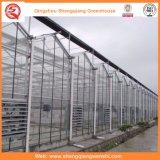 ローズまたはポテトのための庭または農場またはトンネルのマルチスパンのポリカーボネートシートの温室