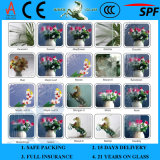 3-8 mm Flora clara 2440*1830mm de vidro laminado colorido