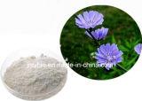 Perte de poids Extrait de racine d'chicorée Inuline 10% par UV
