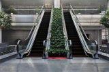 Srh escada rolante/ escada rolante do Custo/Preço escadas rolantes
