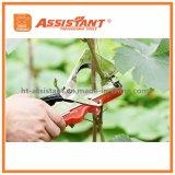結合機械庭の花のフルーツ野菜Tapetoolを結ぶプラント手