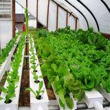 Система Hydroponics парника для плодоовощ цветков овощей