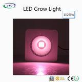 LED 200W grandir la lumière à spectre complet des plantes à des fins commerciales