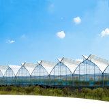 두 배 필름 다중 경간 Hydroponic 농업 녹색 집