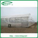 Sale를 위한 토마토 Vegetable Greenhouse