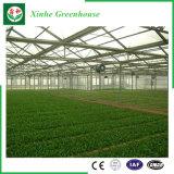 Landbouw/het Commerciële Groene Huis van de Tuin van het PC- Blad voor Bloemen