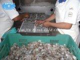 Спиральн замерзать /Spiral быстро замораживателя быстро для продуктов моря мяса