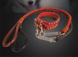 Collares vendedores calientes del perro / del animal doméstico del cuero genuino de la alta calidad de lujo