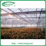 Multispan Flor de efecto invernadero de cristal (XS-GL9600/12000Venlo)