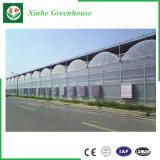 Industrielle multi Überspannungs-Plastikgewächshaus-Polycarbonat-Gewächshaus