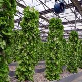 Venda por grosso Hidroponia Hidroponia Sistema Growin Comercial