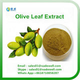 Extrait olive de lame d'extrait d'usine de qualité