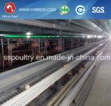 Menor precio 4/5/6 Niveles de equipo automático de las aves de corral a la granja avícola