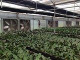 금속 잎 물자와 벽 팬 설치 온실 배기 엔진