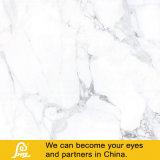 Glasig-glänzende volle Polierporzellan-Marmor-Stein-Bodenbelag-Fliese Statuario