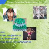 이익 근육에 대한 펩티드에 의하여 냉동 건조되는 분말 에이스 031 사용법 그리고 효력