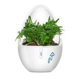 Plant-Extracted Tech-Forest Aroma Diffuseur avec un cadeau de promotion de cristal