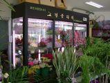 [غنغزهوو] صناعة زهرة عرض برّاد لأنّ زهرة متجر