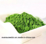 Fertigung-Zubehör-organisches Gersten-Gras-Puder
