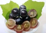 AntioxidationおよびAnti-AgingスキンケアのためのProcyanidin 95%のブドウのシードのエキス