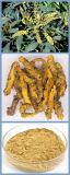 Poudre de l'extrait 97% Berberine de fond de Coptis