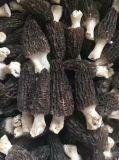 Mejor Morel a la venta de hongos secos Morels Morchella Conica