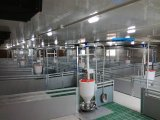 مواش تجهيز ذاتيّة خنزير مغذية خنزير يغذّي آلة