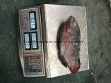 Tilapia van uitstekende kwaliteit van het Product van Zeevruchten Rode en Zwarte Bevroren