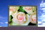 SMD3535 광고를 위한 옥외 풀 컬러 발광 다이오드 표시 (P8, P10)