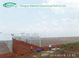 Multi Span Film Greenhouse für Seeding