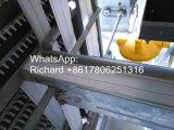 좋은 가격 강철 구조물 닭장