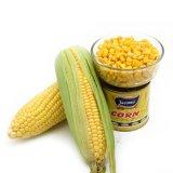 O milho doce pode dentro com alta qualidade