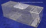 コヨーテの金属線の網のケージ