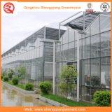 Blumen-/Frucht-/Gemüse-Zucht-Glasgewächshäuser mit Sonnenschutz-System