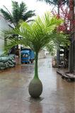 De binnen en Openlucht Gesimuleerde Kokospalm van de Fles