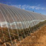 China de plástico resistente a rayos UV de 200 micras Film invernadero túnel