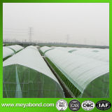 Schermo della finestra della rete dell'insetto della rete dell'insetto dell'anti rete dell'afide di Agriclture dell'HDPE anti