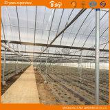 Planting Vegetables와 Fruits를 위한 아치 다중 Span Film Greenhouse
