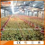 De lichte Bouw van het Landbouwbedrijf van de Kip van het Staal Industriële met de Apparatuur van de Landbouw van het Ontwerp en van de Aanpassing