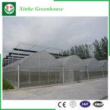 Multi-span Green House en plastique pour la plantation