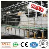 Jaulas del pollo tomatero de la carne del diseño de la vertiente de las aves de corral para la venta