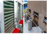 Poul Tech Poulet automatique de la volaille de l'équipement de ferme de la cage d'obtenteur Cage de poulet (H) du châssis
