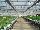 식물성 설치 온실 PC 장 녹색 집