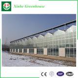 야채 성장하고 있는을%s 다중 경간 상업적인 유리제 온실
